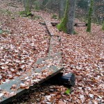 Flowtrail Bad Endbach 031