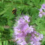 Bikepark Hummel Blumen Bienen