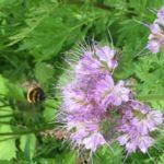 Bikepark Wildblumen Hummeln Bienen Insekten