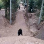 Schwarzwald Bikepark Engelsbrand Pumptrack Flowtrail Dirtpark MTB Trails 39