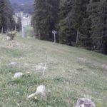 Bikepark Tirol Trailpark Planung Zugspitz Arena Flowline