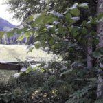 Bikepark Oberammergau Flowtrail Bayern Downhill Alpen 09