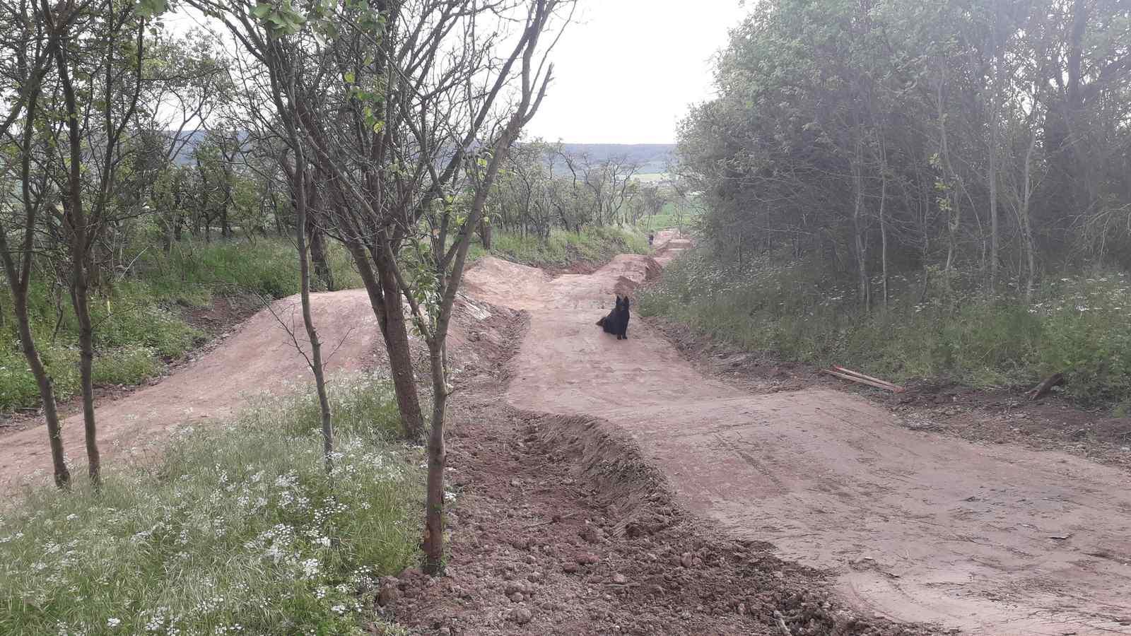 Bikepark braunlage singletrail