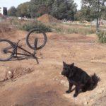 Dirtpark Wetzlar Mtb Kicker Fahrrad Schanze Bauen 33