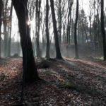 Dirtpark Hamburg Trailpark Mountainbike Trails Legalisieren 04